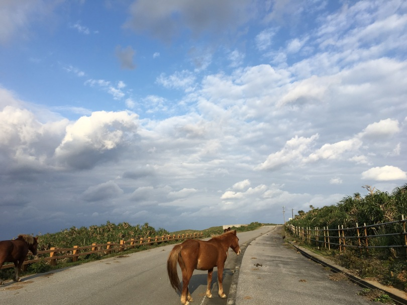 horse walks on the road