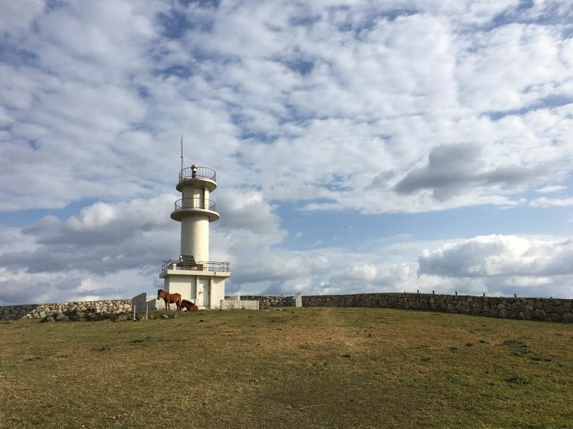 horses near lighthouse