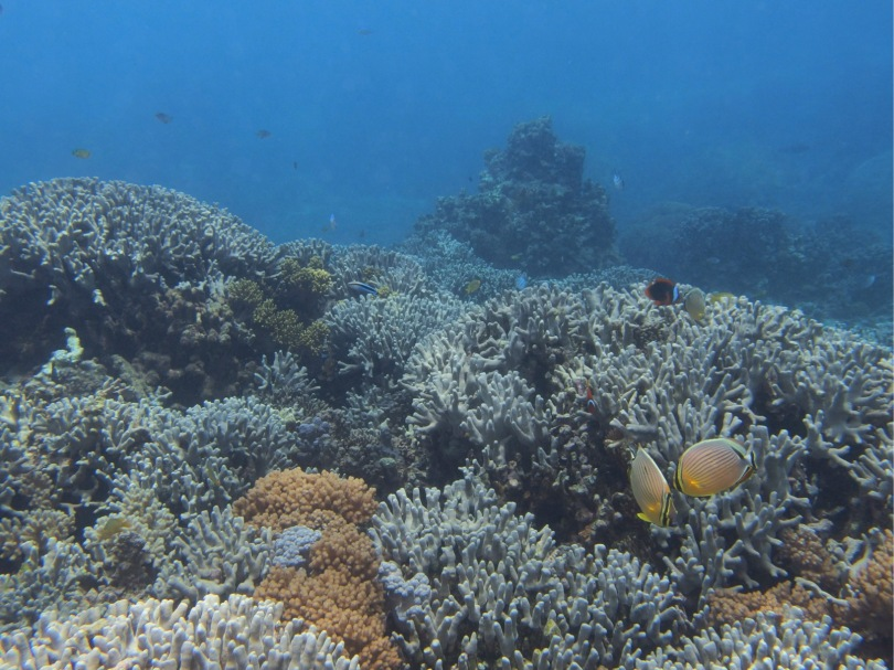 corals and fishes in miyako island