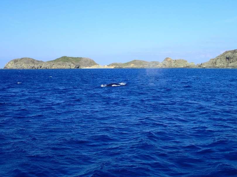 whale in hahajima