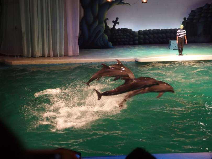 dolphin show in aquarium